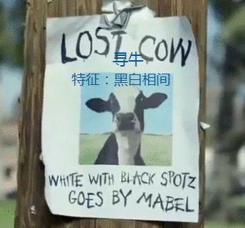 看完这头牛,我想吃炸鸡了...